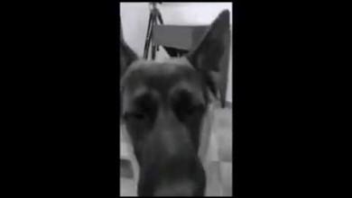 Photo of A San Valentino , Amo il mio cane !