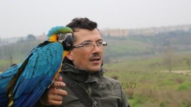 Photo of PASSIONE PAPPAGALLI. QUESTI BELLISSIMI PENNUTI POSSONO VIVERE CON NOI COME GLI ALTRI ANIMALI