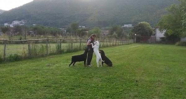 Photo of Addestrare il cane. Collare a scorrimento o pettorina?