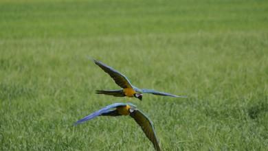 Photo of Il volo libero dei pappagalli. L'amore non basta