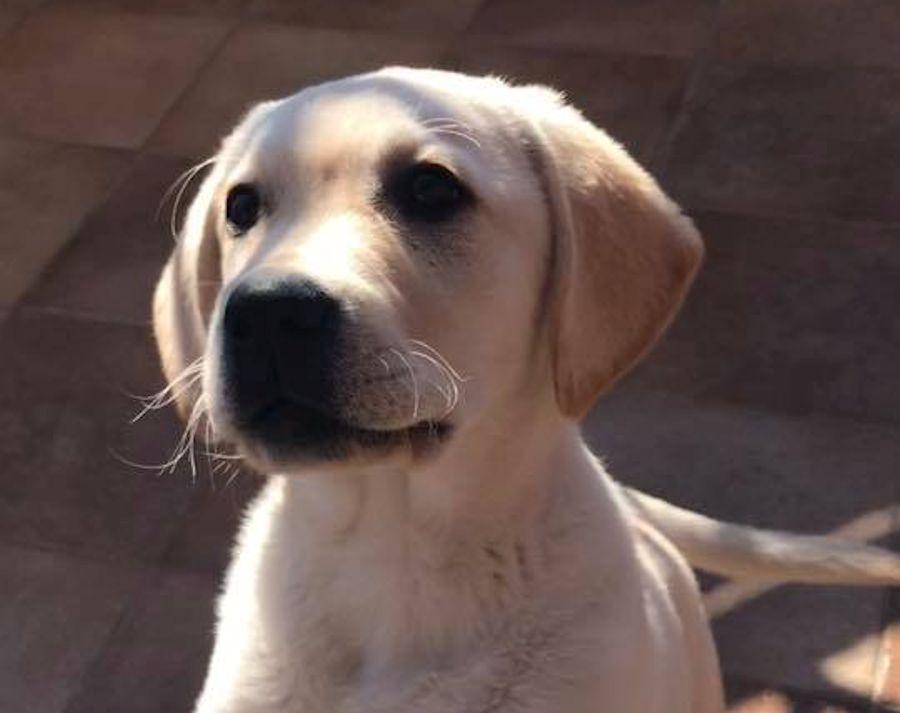 Photo of Addestro il mio cane a calci : Enzo Salvi non ci stà , e attaca Filippo del Grande Fratello