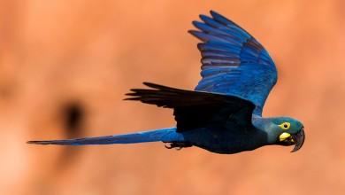 """Photo of """"Volare Insieme"""" : i pappagalli in volo sulle rive del lago di Castel Gandolfo"""