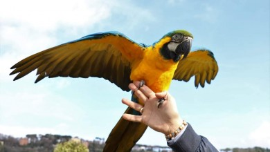 "Photo of ""Volare insieme"" a Castel Gandolfo : grande successo ."