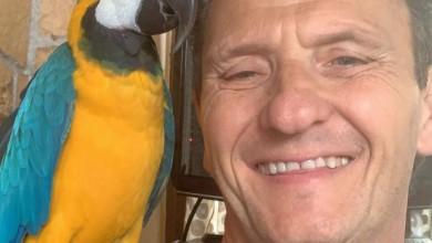 """Photo of Stabile e sotto osservazione """"Fly"""" , il pappagallo di Enzo Salvi aggredito . Denunciato ma a piede libero il suo aggressore"""