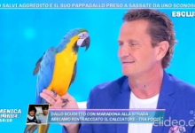 "Photo of Enzo Salvi da Barbara D'Urso : Temevo  che il mio ""Fly"" morisse ( Video )"